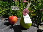 Fruit Place Card Holders